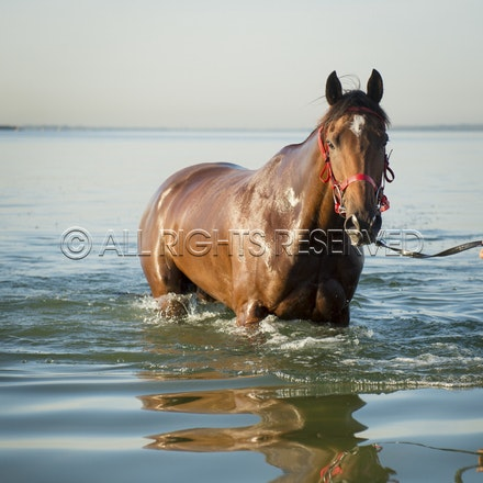 Botany Bay, Broadside_06-04-16, Sharon Chapman_0050