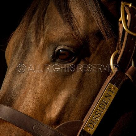 Newgate Stallions, Dissident_12-04-16_0106
