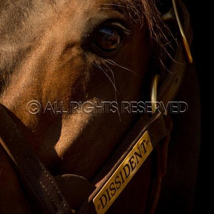 Newgate Stallions, Dissident_12-04-16_0105