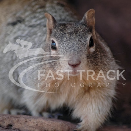 Grand Canyon, Squirrel, Oreo_Limited Edition Prints_002