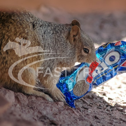 Grand Canyon, Squirrel, Oreo_Limited Edition Prints_003