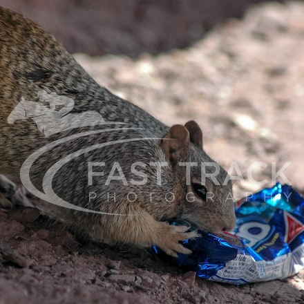 Grand Canyon, Squirrel, Oreo_Limited Edition Prints_004