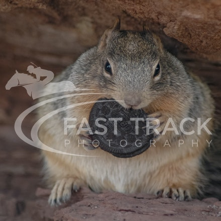 Grand Canyon, Squirrel, Oreo_Limited Edition Prints_005
