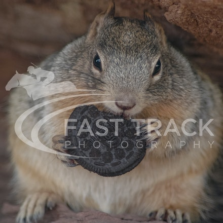 Grand Canyon, Squirrel, Oreo_Limited Edition Prints_006