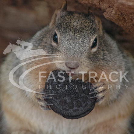 Grand Canyon, Squirrel, Oreo_Limited Edition Prints_008