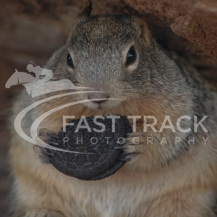 Grand Canyon, Squirrel, Oreo_Limited Edition Prints_009