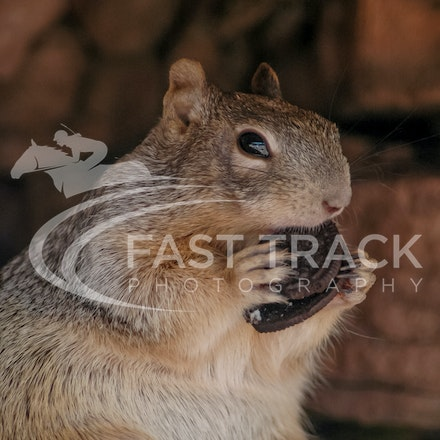 Grand Canyon, Squirrel, Oreo_Limited Edition Prints_012