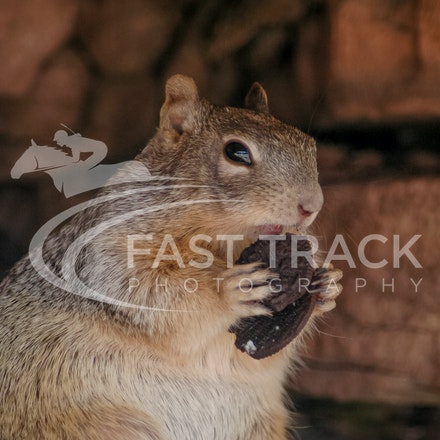Grand Canyon, Squirrel, Oreo_Limited Edition Prints_013