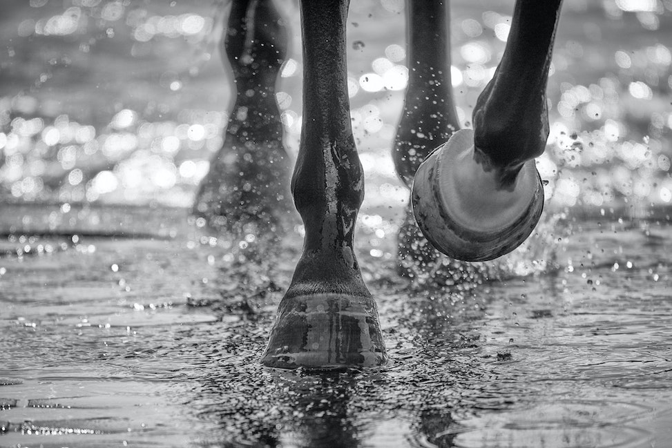 Caulfield,Hooves_11-03-15_0090Ab-Edit