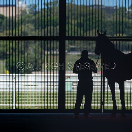 Race 5, Winx_03-03-18, Royal Randwick, Sharon Lee Chapman_0002