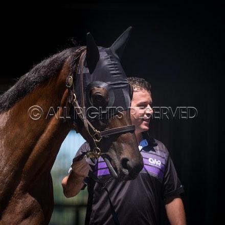 Race 5, Winx_03-03-18, Royal Randwick, Sharon Lee Chapman_0015