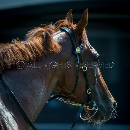 Race 1, I Am Excited_24-03-18, Rosehill, Sharon Lee Chapman_0016