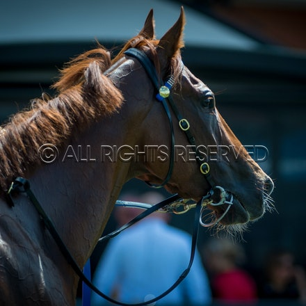 Race 1, I Am Excited_24-03-18, Rosehill, Sharon Lee Chapman_0018