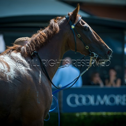 Race 1, I Am Excited_24-03-18, Rosehill, Sharon Lee Chapman_0019