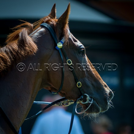Race 1, I Am Excited_24-03-18, Rosehill, Sharon Lee Chapman_0017