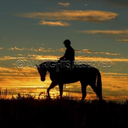 Trackwork, Sunrise, Lupo Nero, Matthew Palmer_03-09-16, Birdsville,_021