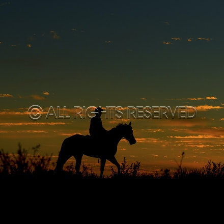 Trackwork, Sunrise, Lupo Nero, Matthew Palmer_03-09-16, Birdsville,_007