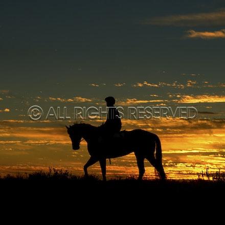 Trackwork, Sunrise, Lupo Nero, Matthew Palmer_03-09-16, Birdsville,_005