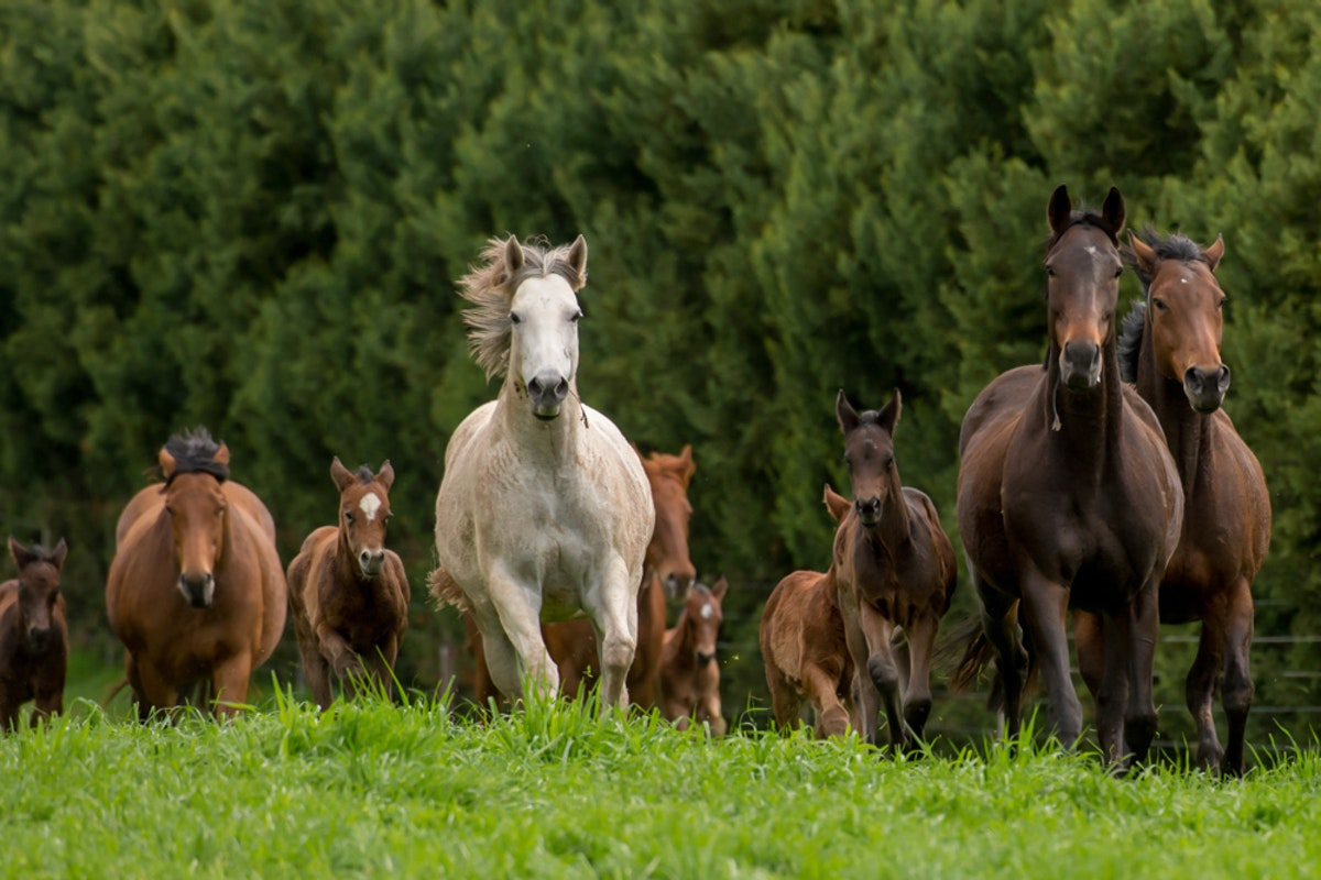 Swettenham Mares and Foals_25-08-13_0133