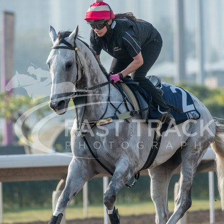 Sha Tin Trackwork - 4 December 2013