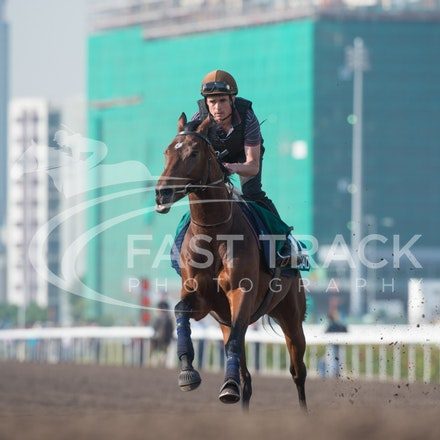 Sha Tin Trackwork - 5 December 2013