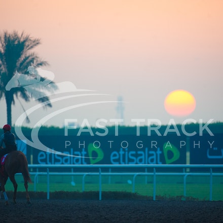 Dubai World Cup Trackwork 2013
