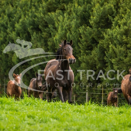 Swettenham Mares and Foals_25-08-13_0130