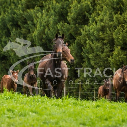 Swettenham Mares and Foals_25-08-13_0131