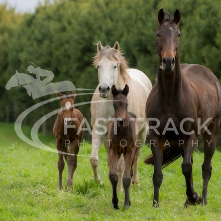 Swettenham Mares and Foals_25-08-13_0137