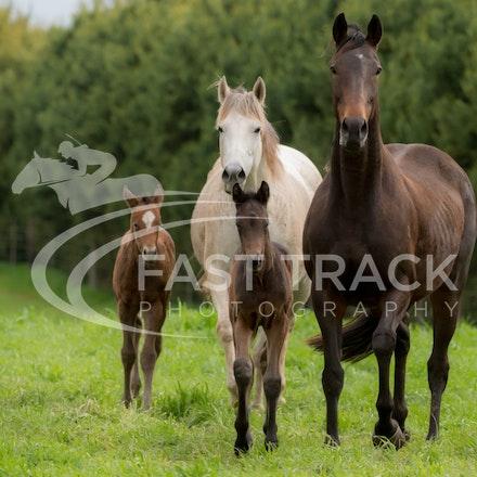 Swettenham Mares and Foals_25-08-13_0138