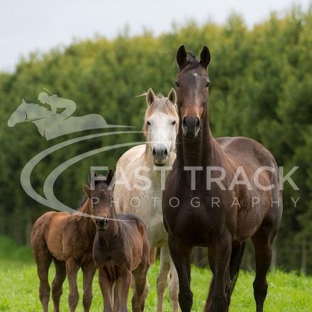 Swettenham Mares and Foals_25-08-13_0143