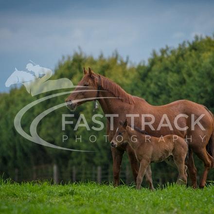 Swettenham Mares and Foals_25-08-13_0163