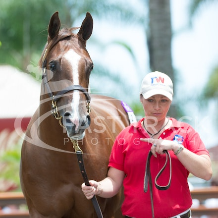 Lot 2, Written Tyccon x Queenie_08-01-14, Day One, Magic Millions, Gold Coast, Sharon Chapman_031