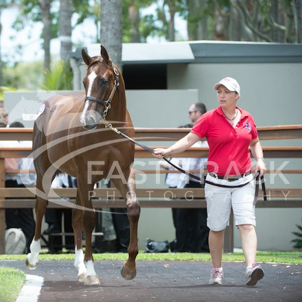 Lot 2, Written Tyccon x Queenie_08-01-14, Day One, Magic Millions, Gold Coast, Sharon Chapman_035