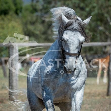 Stallion Shoot, Bart, Randles_16-01-14, Scone_001