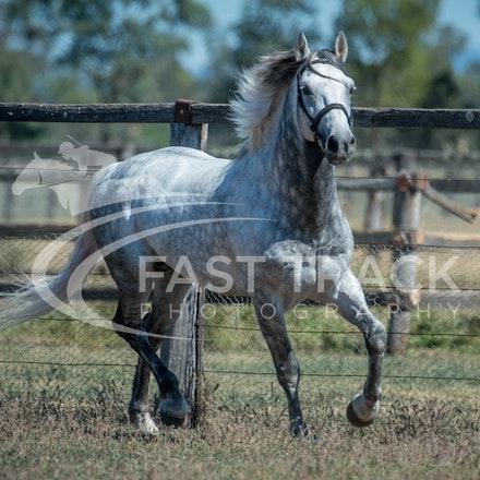 Stallion Shoot, Bart, Randles_16-01-14, Scone_002