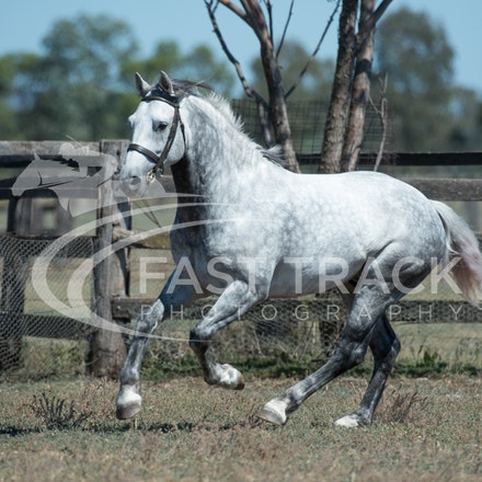 Stallion Shoot, Bart, Randles_16-01-14, Scone_007