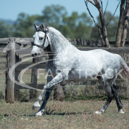 Stallion Shoot, Bart, Randles_16-01-14, Scone_008