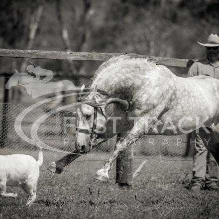 Stallion Shoot, Bart, Randles_16-01-14, Scone_009