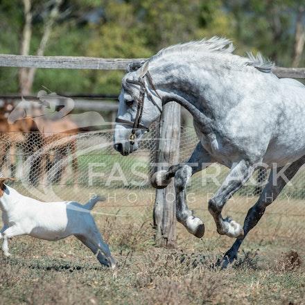 Stallion Shoot, Bart, Randles_16-01-14, Scone_010