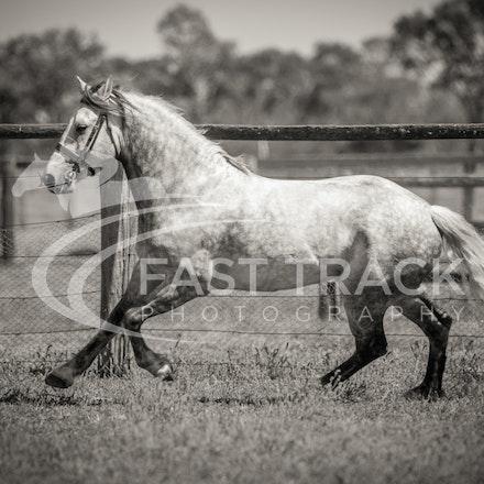 Stallion Shoot, Bart, Randles_16-01-14, Scone_005