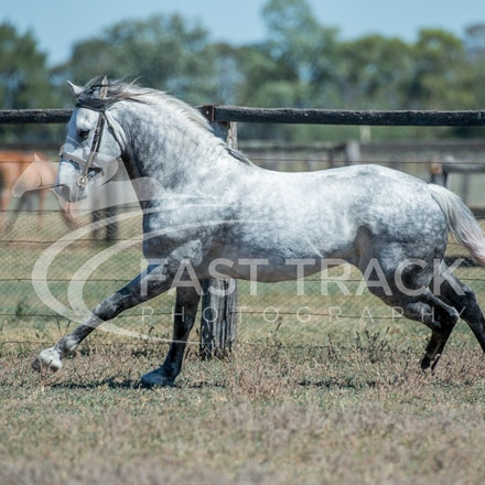 Stallion Shoot, Bart, Randles_16-01-14, Scone_006