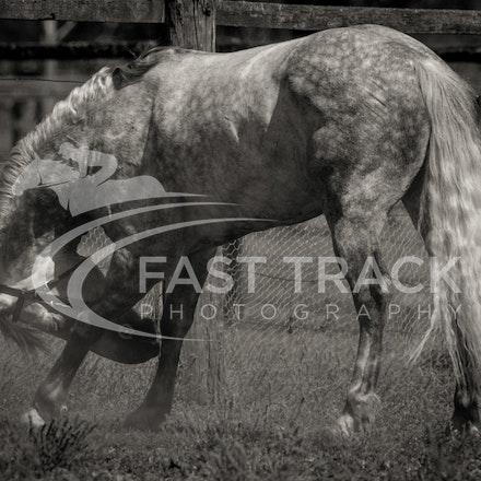 Stallion Shoot, Bart, Randles_16-01-14, Scone_014