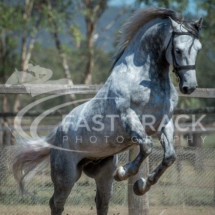 Stallion Shoot, Bart, Randles_16-01-14, Scone_016
