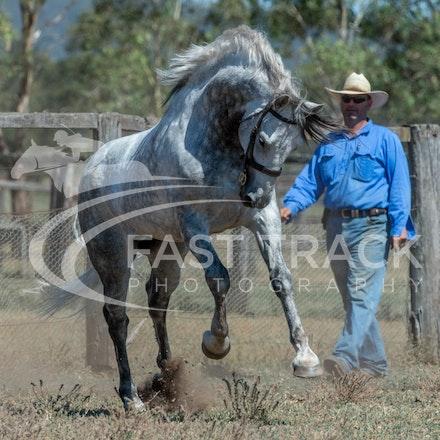 Stallion Shoot, Bart, Randles_16-01-14, Scone_017