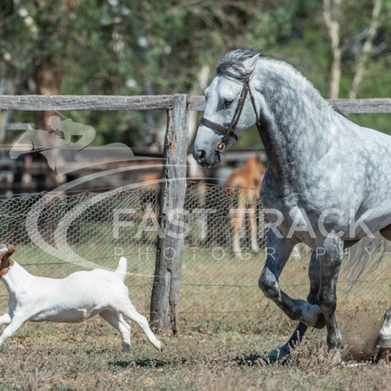 Stallion Shoot, Bart, Randles_16-01-14, Scone_012