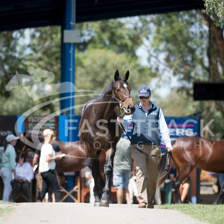 Melbourne Inglis Premier - Inspection Day 28 February 2014