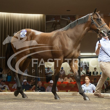 Lot 386, Exceed and Excel x Miduki_04-03-14, Melbourne Inglis Premier_0202