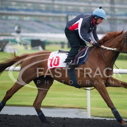 Dubai World Cup 2014 - Trackwork 26 March 2014