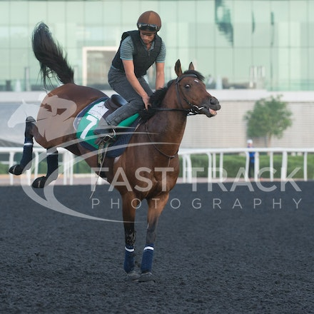 Dubai World Cup 2014 - Trackwork 27 March 2014
